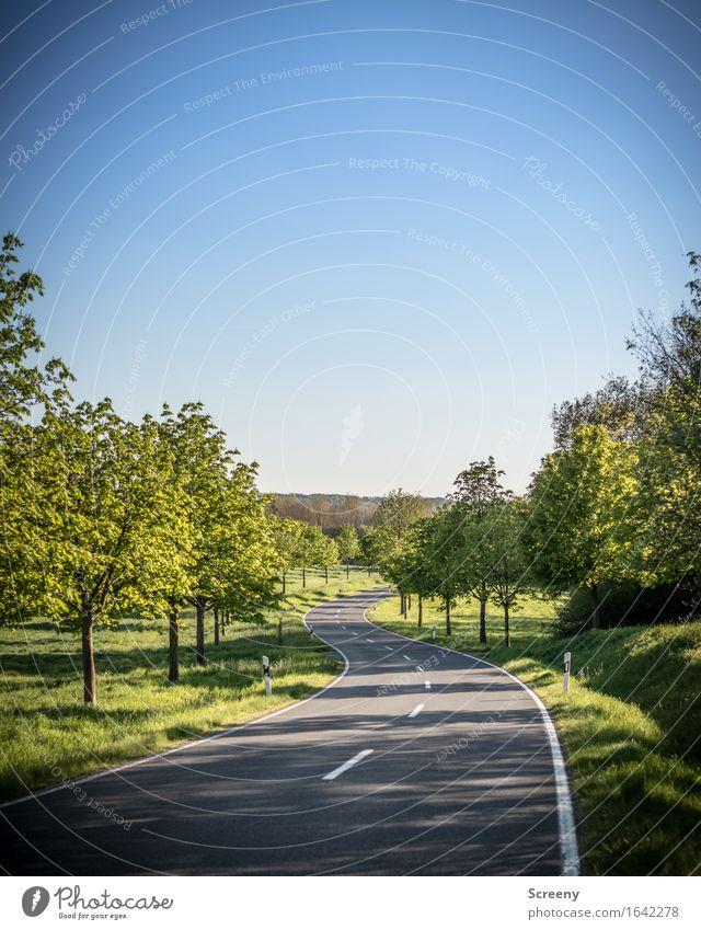 Schwungvoll Ferien & Urlaub & Reisen Ausflug Freiheit Natur Landschaft Pflanze Himmel Wolkenloser Himmel Sonne Sonnenlicht Frühling Sommer Baum Gras Sträucher