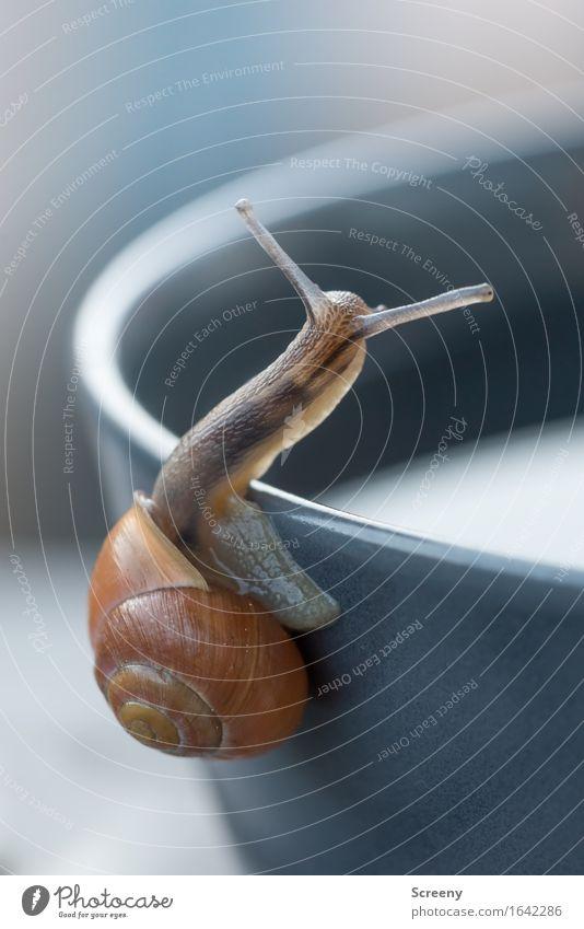 Oder doch da lang? Natur Tier Frühling Schnecke 1 krabbeln klein nass Gelassenheit geduldig ruhig Schneckenhaus Ecke Schalen & Schüsseln langsam Farbfoto