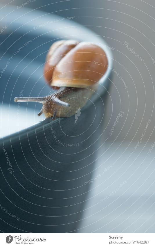 Da lang... Natur Tier Frühling Schnecke 1 krabbeln klein nass langsam Schneckenhaus Schalen & Schüsseln Ecke Farbfoto Außenaufnahme Makroaufnahme Menschenleer
