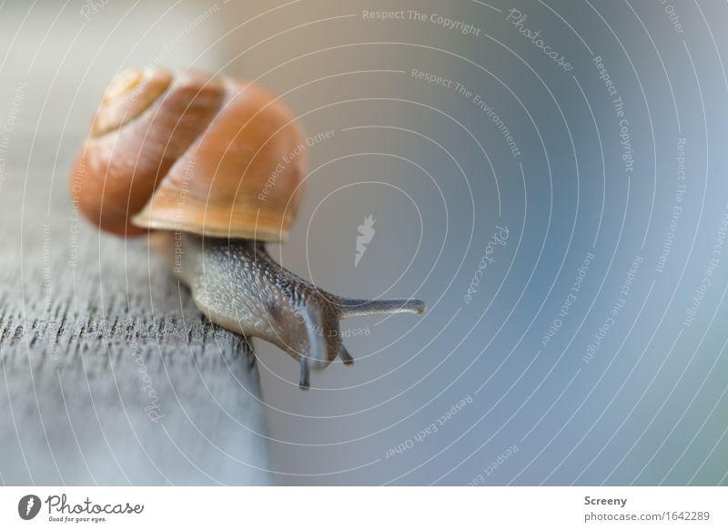 Da soll ich runter? Natur Tier Garten Schnecke 1 krabbeln klein braun Gelassenheit geduldig ruhig schleimig Schneckenhaus Höhe Höhenangst Ecke Farbfoto