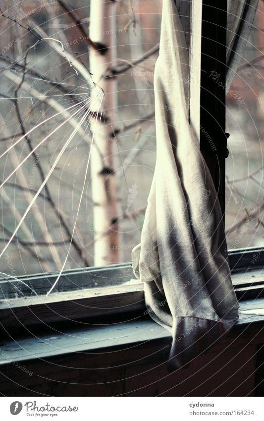 [DD|Apr|09] Zurückgelassen Natur schön Baum ruhig Einsamkeit Leben Fenster träumen Traurigkeit Stimmung ästhetisch Sicherheit Hoffnung Häusliches Leben Romantik