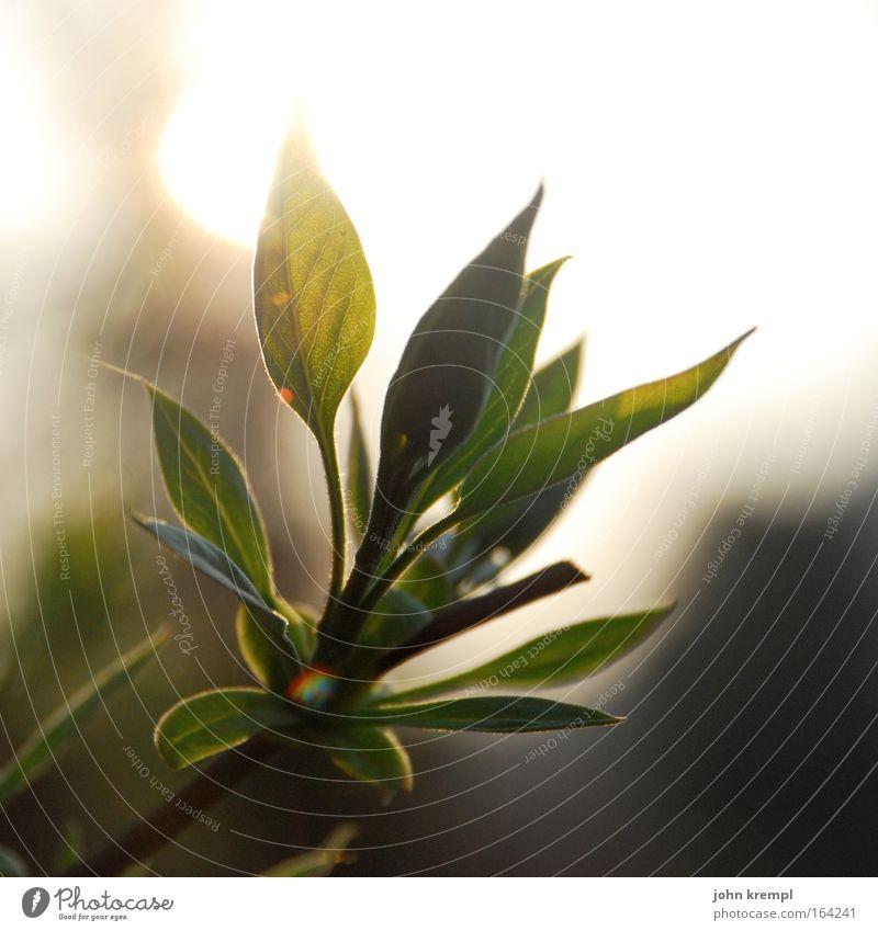 mr. spock Natur schön grün Pflanze ruhig Tier gelb Wiese Park gold Sträucher Grünpflanze Blattgrün