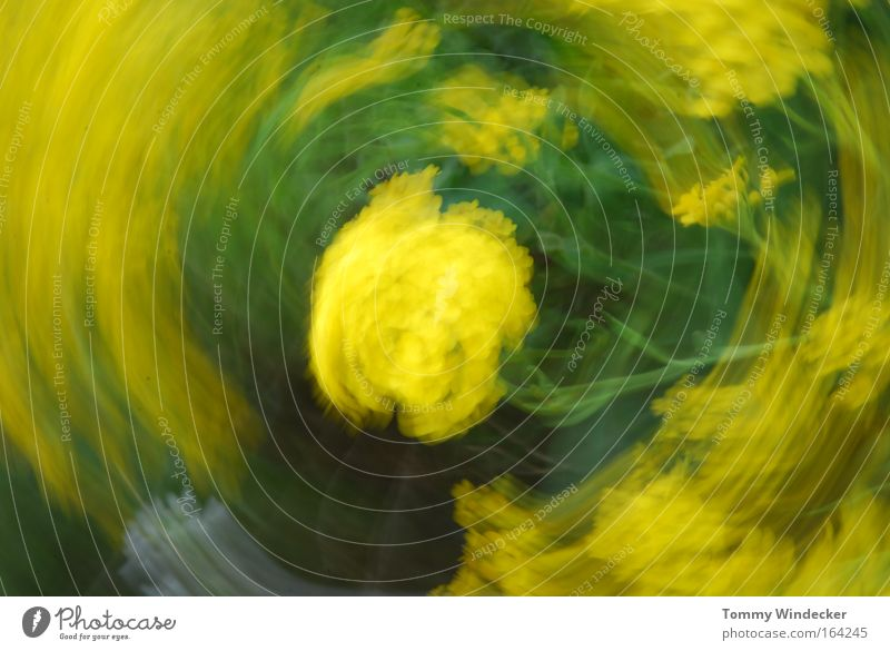 Schleudergang II Farbfoto Außenaufnahme abstrakt Bewegungsunschärfe Natur Pflanze Tier Frühling Sommer Sturm Blume Sträucher Grünpflanze Blühend drehen Duft