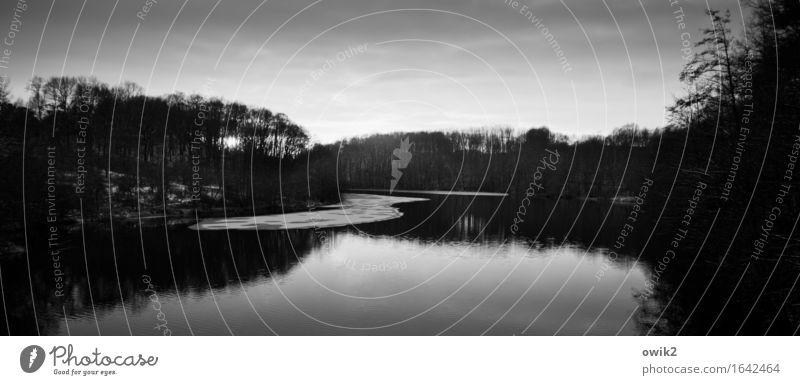 Später Winter Umwelt Natur Landschaft Pflanze Horizont Klima Schönes Wetter Eis Frost Baum Seeufer kalt ruhig Idylle Ferne Windstille Reflexion & Spiegelung