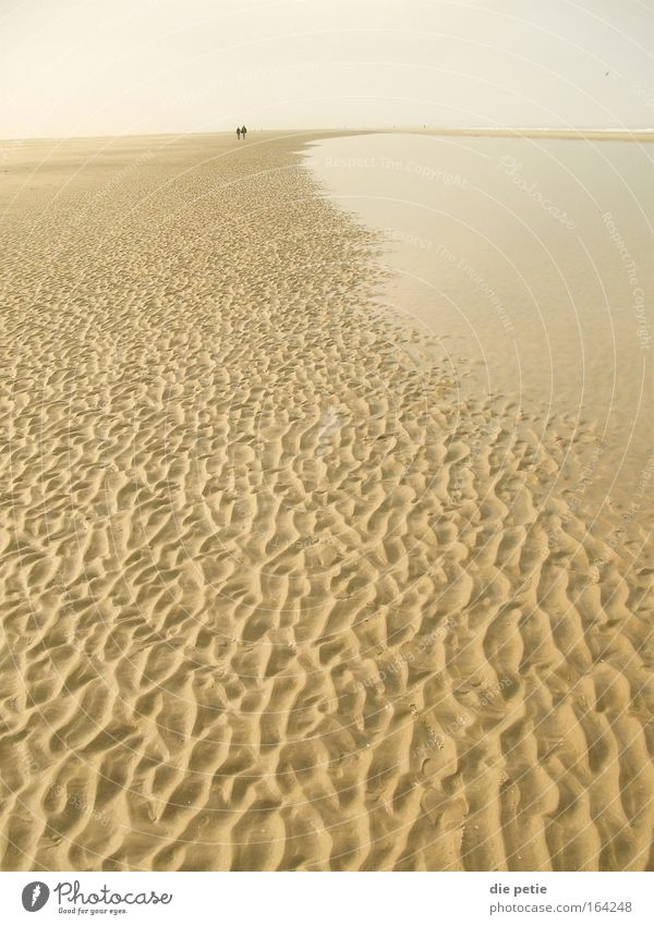 there`s nothing Wasser weiß Winter Einsamkeit Ferne Erholung Freiheit grau Denken Sand Zufriedenheit braun wandern Umwelt Horizont einfach