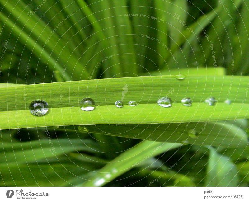 Auffangrinne Wasser Blatt Regen Wassertropfen Reihe Furche Wasserrinne Querblatt