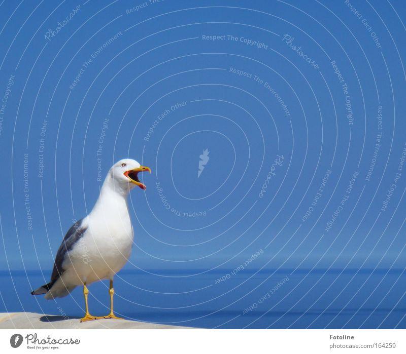 Schreihals Wasser weiß blau Tier gelb Glück Stein hell Vogel fliegen ästhetisch Tiergesicht Flügel heiß natürlich schreien
