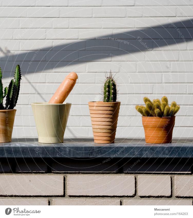 Individualist Natur Pflanze Erholung Blume Freude Glück außergewöhnlich Garten rosa einzigartig exotisch bizarr Lust Liebeskummer Begierde Kaktus