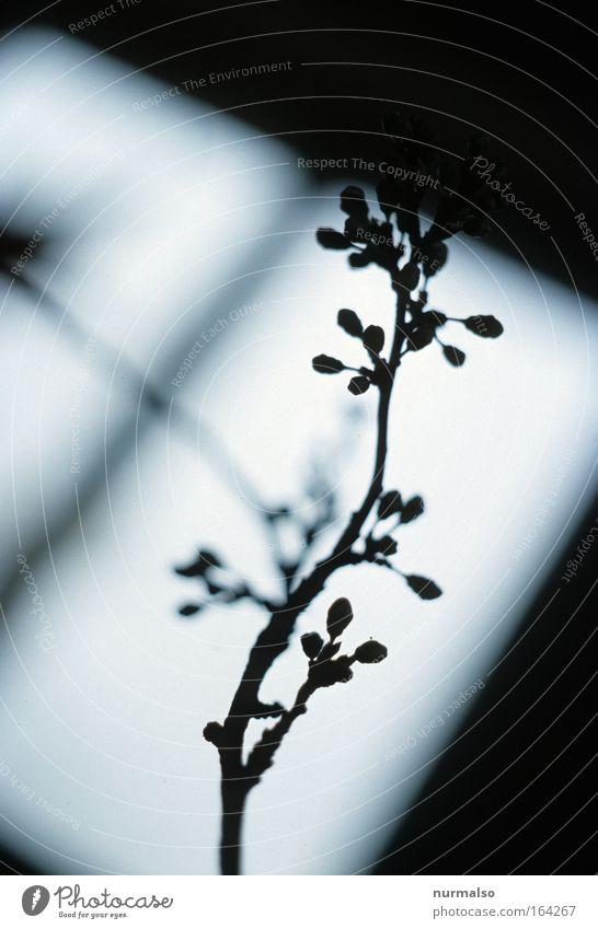 Schattenriss vom Frühling Gedeckte Farben Innenaufnahme Menschenleer Morgen Morgendämmerung Wohnung einrichten Innenarchitektur Dekoration & Verzierung Kunst