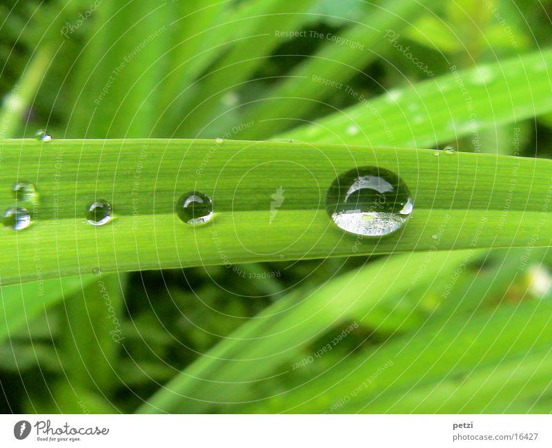 Tropf..., Tröpf..., Tröpfchen Seil Wassertropfen Regen Blatt grün Furche breit aufgefangen Farbfoto Außenaufnahme Detailaufnahme Makroaufnahme Menschenleer