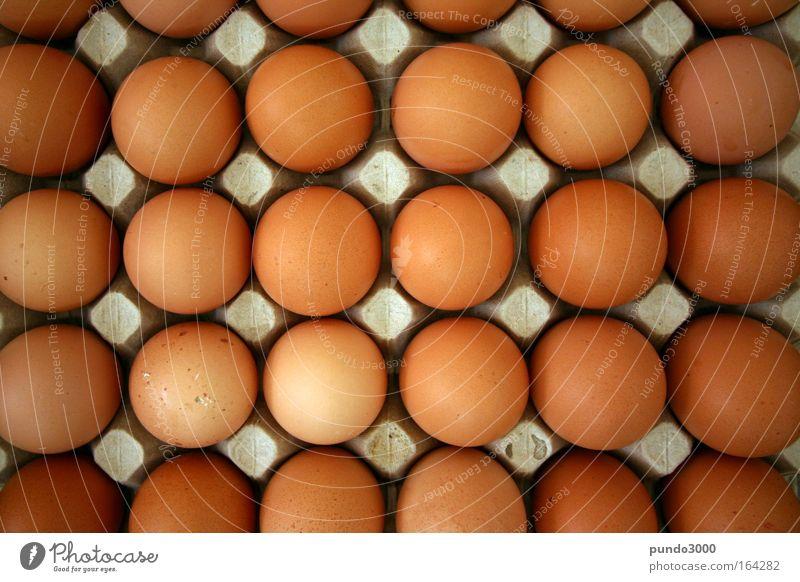 Eier von oben Ernährung braun Lebensmittel Bioprodukte Nutztier Hühnerei