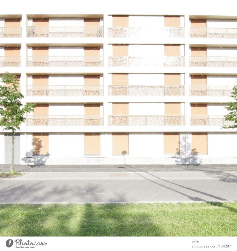 sun isolation Farbfoto Außenaufnahme Menschenleer Tag Licht Schatten Sonnenlicht High Key Totale Schönes Wetter Blume Gras Wiese Stadt Haus Hochhaus Platz