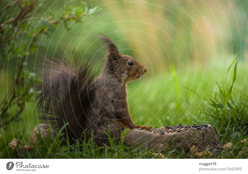 Eichhörnchen / Squirrel Natur grün Sommer Tier Frühling natürlich Garten braun Wildtier Schönes Wetter niedlich Freundlichkeit Neugier Fell Tiergesicht Fressen