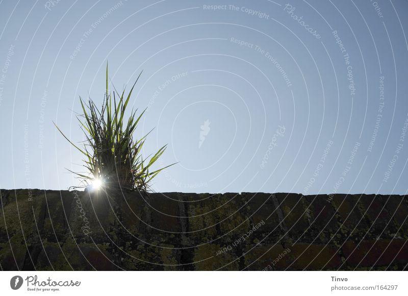 Lass Gras drüber wachsen... Natur Sonne blau ruhig Leben Gras Freiheit Traurigkeit Kraft Hoffnung Sicherheit Wachstum Zukunft Frieden Verbindung Vergangenheit