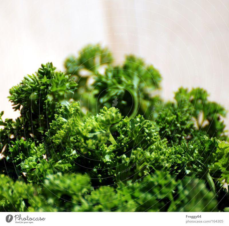 Peterle Petersilie Kräuter & Gewürze feine küche Gesundheit Bündel Würzig grün Küchenkräuter Nahaufnahme Schwache Tiefenschärfe