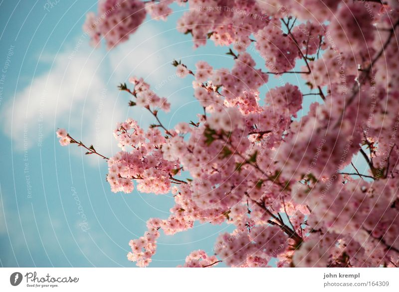 japaziki Natur schön Himmel Baum blau Pflanze rot Wolken Tier Blüte Frühling Glück rosa Umwelt Fröhlichkeit Lebensfreude