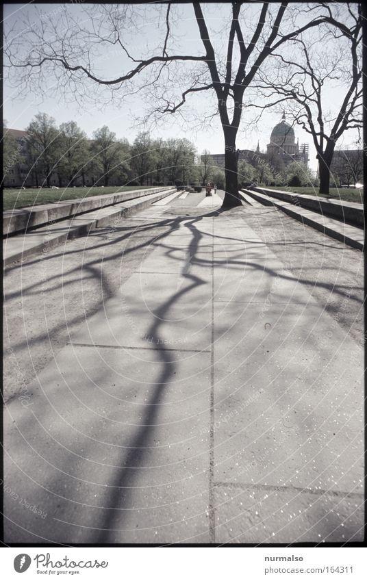 P-P-D-E Baum Freude Ferne Holz Stein Park Architektur gehen Umwelt hoch Europa Coolness Platz Netz einfach