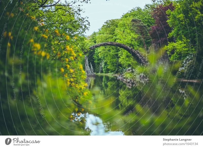 Rakotzbrücke Natur Pflanze Wasser Frühling Sommer Baum Grünpflanze Park Teich Brücke Architektur beobachten Blühend Duft gehen wandern Steinbrücke Farbfoto