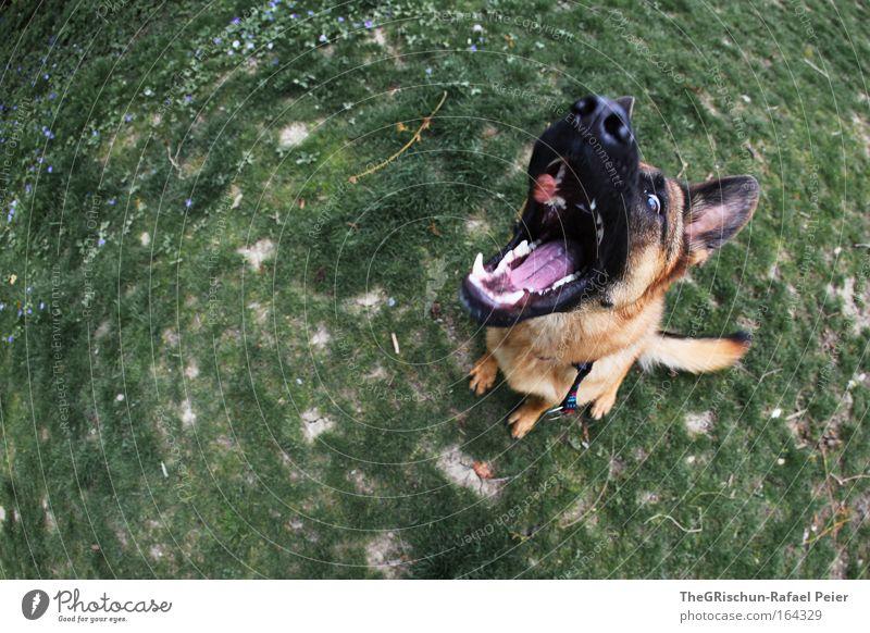 Hungry Dog grün Freude schwarz Tier Gefühle Hund Zufriedenheit Erfolg Erde Fröhlichkeit Coolness bedrohlich wild Lebensfreude fangen außergewöhnlich