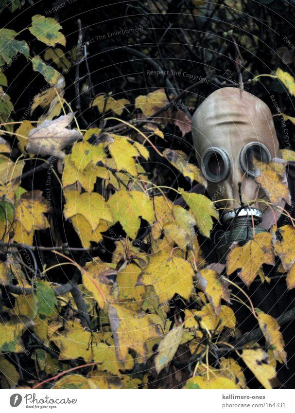 reine Luft Mensch Natur Baum grün Pflanze Blatt schwarz gelb Wald kalt Herbst Kopf maskulin Umwelt gefährlich