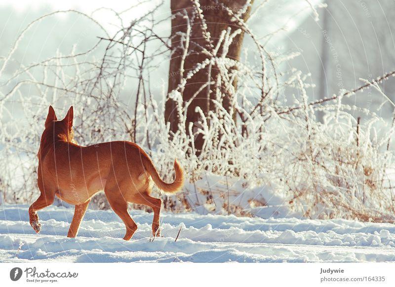 Rückblick Natur weiß Winter Einsamkeit Tier Wald kalt Schnee Freiheit Hund Landschaft Eis Stimmung braun wandern laufen