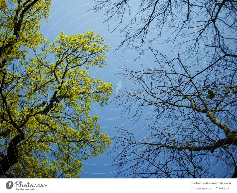 (W)Irrungen der Natur Himmel blau grün schön Baum Pflanze Blatt Umwelt Wärme oben Frühling Holz Luft Park braun