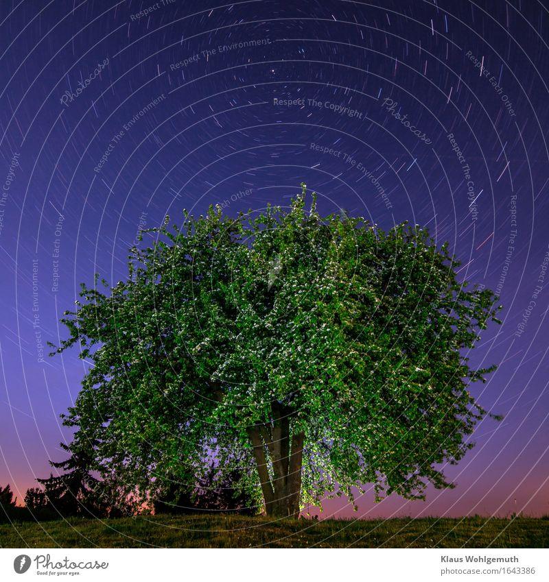 Über allen Gipfeln ist Ruh' ruhig Umwelt Natur Landschaft Pflanze Himmel Wolkenloser Himmel Nachthimmel Stern Horizont Frühling Baum Blüte Birnbaum Obstbaum