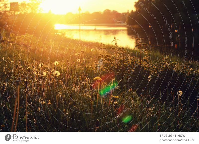 Sommerabend Glück Wellness Leben harmonisch Wohlgefühl Zufriedenheit Sinnesorgane Erholung ruhig Meditation Schwimmen & Baden Ferien & Urlaub & Reisen Tourismus