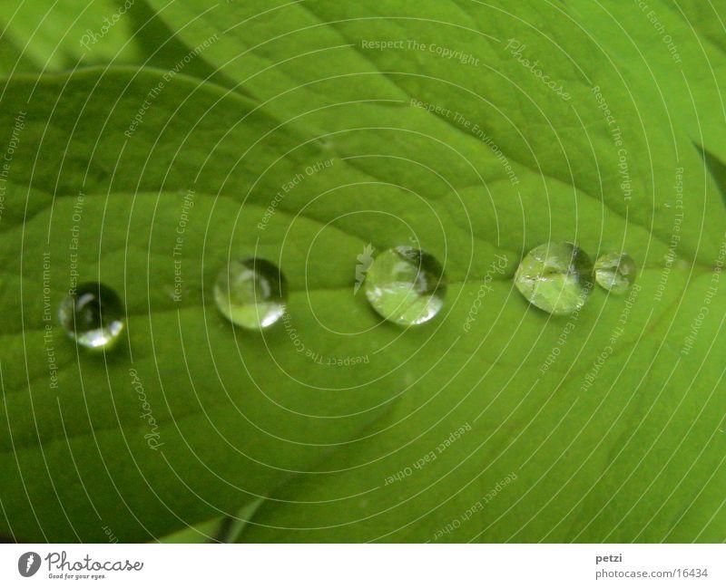 Tropfen in Reih und Glied..... Wasser grün Blatt Regen Wassertropfen Seil Furche Blattadern