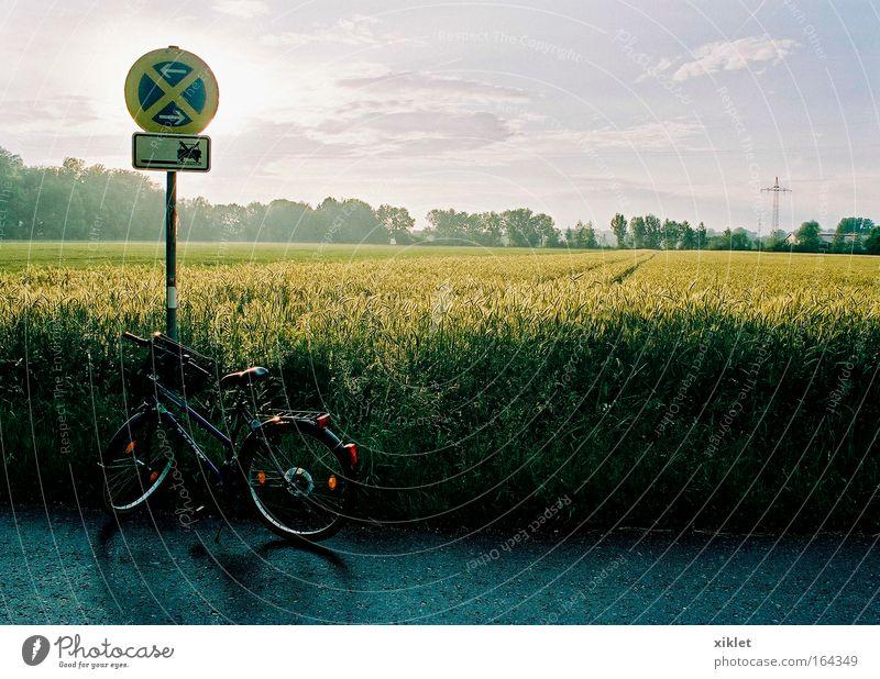 Himmel Natur grün schön Pflanze ruhig Ferne gelb Umwelt Landschaft Straße Spielen Bewegung Gras grau Glück