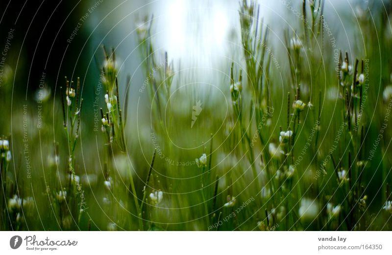 IIIIIIIIIIIIIII Blume grün Pflanze Blüte Frühling klein Umwelt Duft Wildpflanze