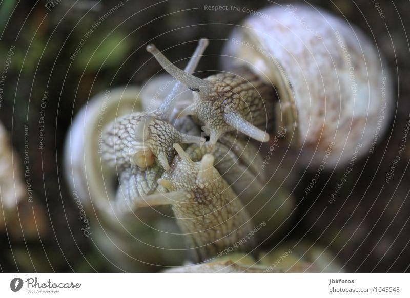 3samkeit Lebensmittel Ernährung Umwelt Natur Tier Nutztier Wildtier Schnecke Tiergesicht Weinbergschnecken Tiergruppe Tierfamilie trendy einzigartig Sex Verkehr