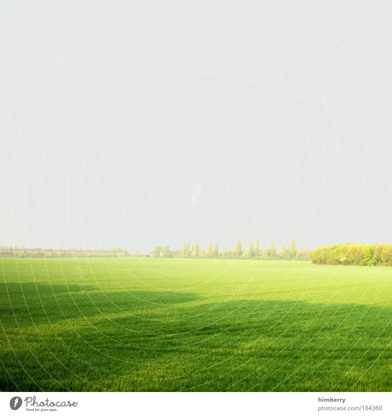 bionade Himmel Natur grün Pflanze ruhig Erholung Umwelt Landschaft Wiese Leben Freiheit grau Park Wetter Zufriedenheit Feld