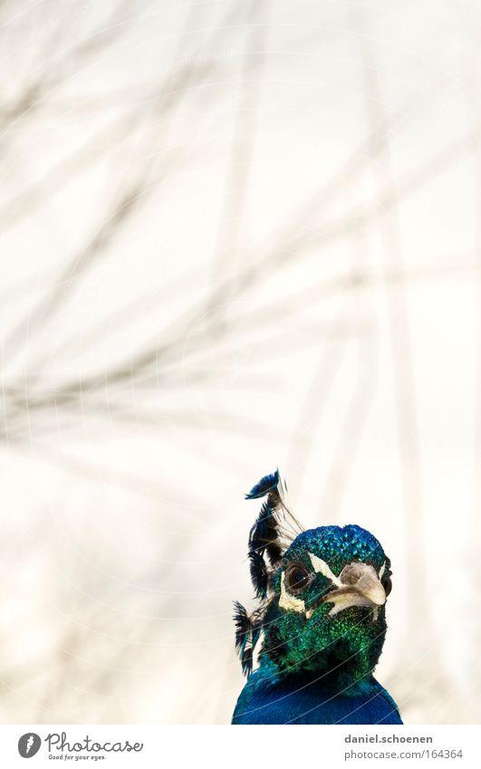 Jürgen Farbfoto Außenaufnahme Detailaufnahme Menschenleer Textfreiraum oben Textfreiraum Mitte Hintergrund neutral Tag Licht Gegenlicht Tierporträt