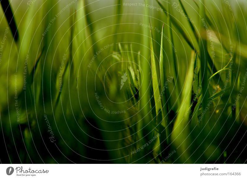 Gras Farbfoto Nahaufnahme Tag Schatten Sonnenlicht Unschärfe Starke Tiefenschärfe Sommer Umwelt Natur Pflanze Wildpflanze Wiese Bewegung Wachstum grün