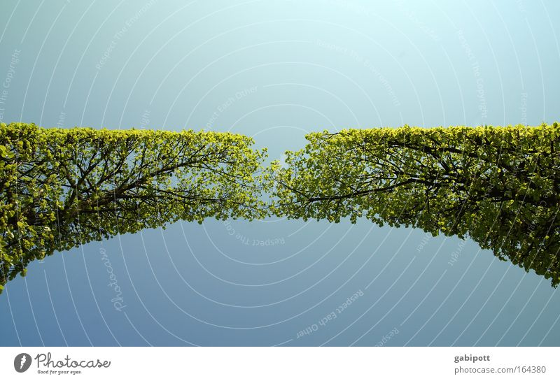 zusammen | wachsen Himmel Natur Pflanze blau grün schön Baum Landschaft Frühling Wachstum Kraft berühren Zusammenhalt Symmetrie Grünpflanze