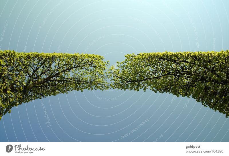zusammen | wachsen Natur Landschaft Himmel Frühling Pflanze Baum Grünpflanze berühren Wachstum blau grün Kraft schön Symmetrie Zusammenhalt Gartenarchitektur