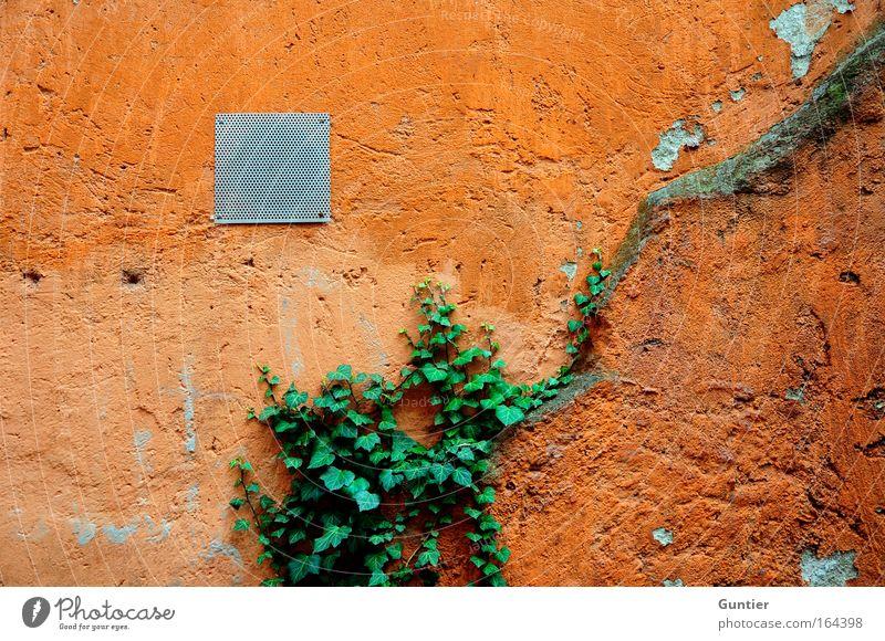 bald alles grün... rot Haus gelb Wand Mauer Fassade Klettern Efeu entern