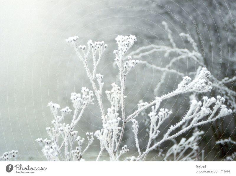 Winterimpressionen weiß Winter ruhig kalt Eis Nebel Ast Schneelandschaft Schnellzug Raureif