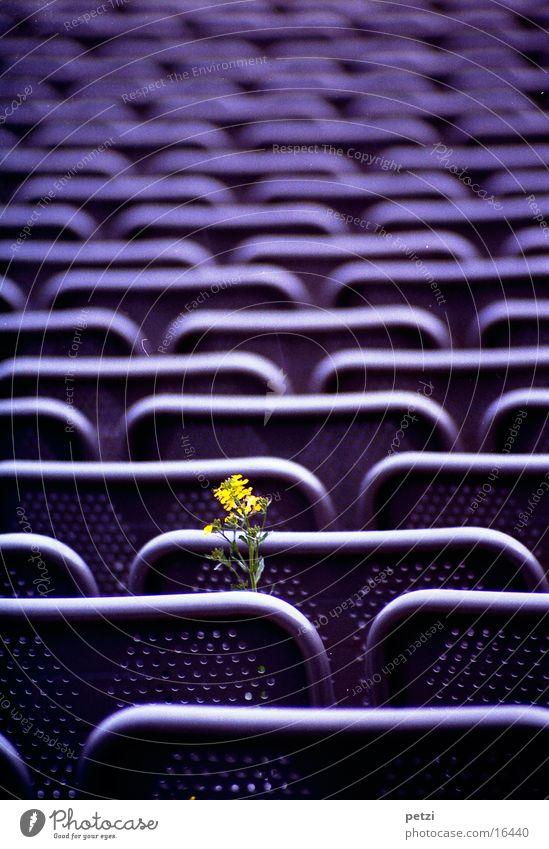 Leben setzt sich durch Blume grün gelb Leben Freizeit & Hobby violett Stahl Reihe Sessel Bergbau Steinbruch