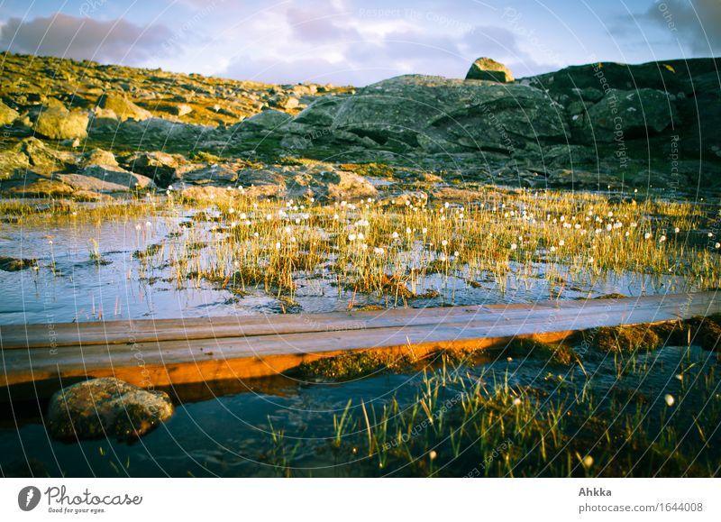 Überbrückung Natur Wasser Sonnenaufgang Sonnenuntergang Sonnenlicht Gras Felsen Moor Sumpf Teich Wege & Pfade Holz Linie nass Wärme wild Stimmung Vertrauen