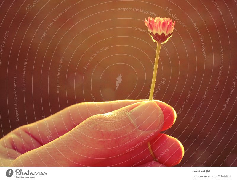 Happy Birthday To You. Natur Hand Pflanze Blume Einsamkeit Erholung Umwelt Frühling Zufriedenheit elegant ästhetisch Klima einzigartig Sehnsucht zart nah