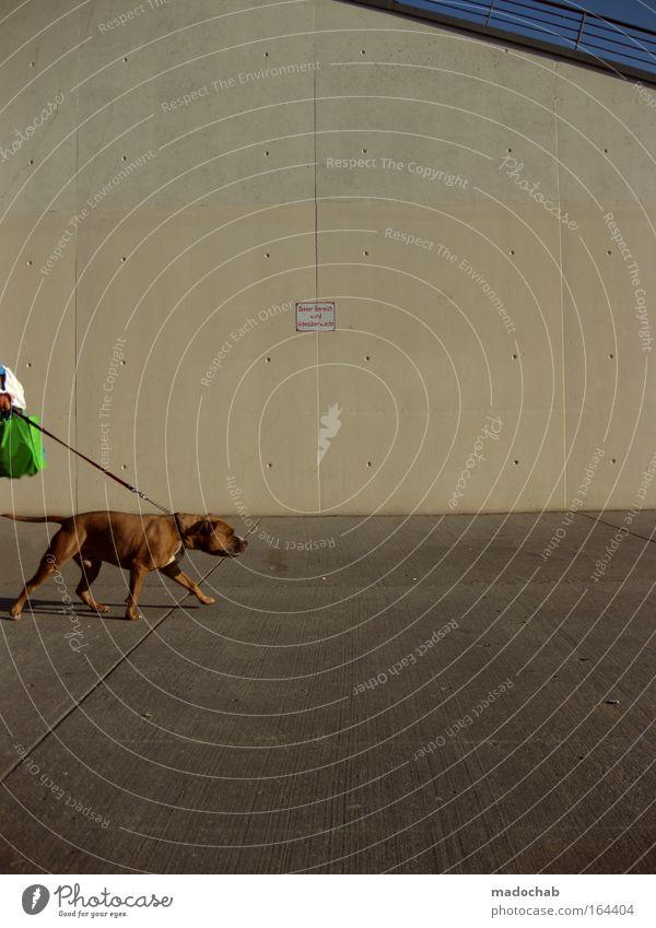 doggystyle Stadt Hund Tier kalt Wand Mauer Kraft Fassade wild Coolness Schutz stark Stress führen Kontrolle Haustier