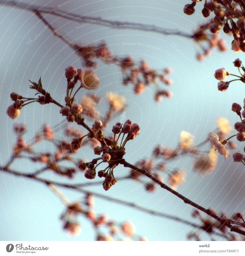 Jahreszeitlich bedingt Natur Himmel Baum blau Pflanze Blüte Bewegung Frühling Holz klein rosa Umwelt neu Wachstum Frieden