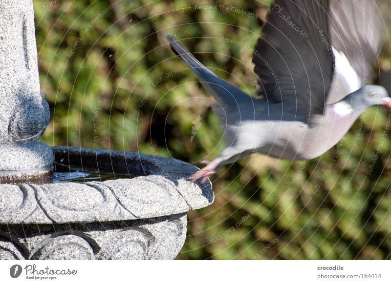 abflug Natur Pflanze grün Wasser Tier Freude Ferne Umwelt Leben grau fliegen frei Wildtier ästhetisch Sträucher Beginn