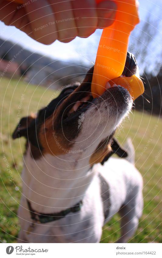 Wo ist das Stecki? Hund Natur Hand Freude Tier Spielen Gras Garten wild Fröhlichkeit authentisch niedlich festhalten Tiergesicht Schönes Wetter nah
