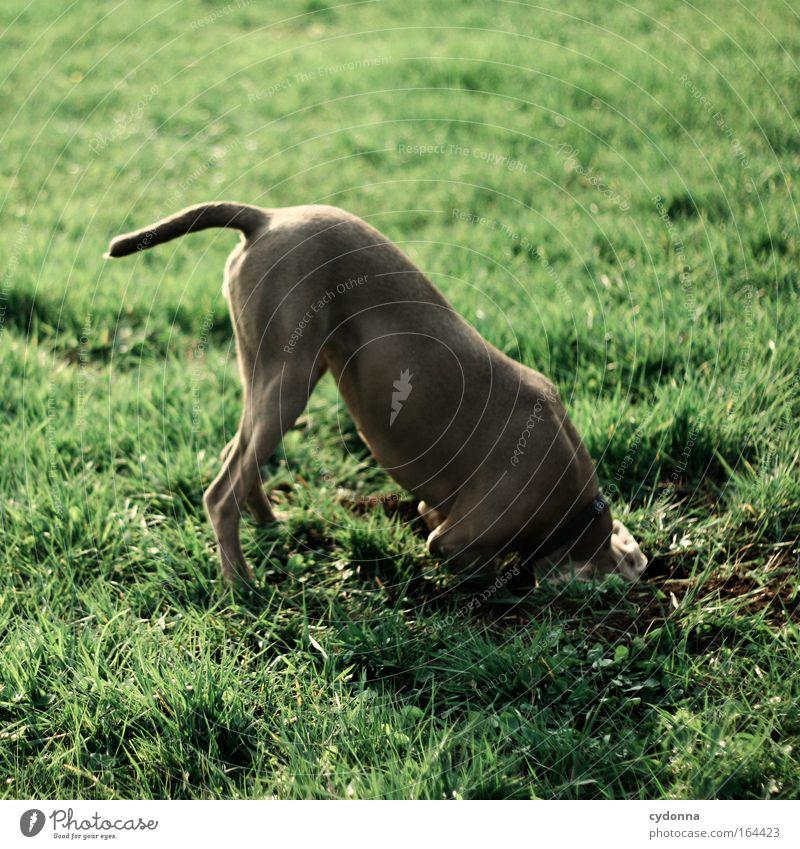 [DD|Apr|09] Duck und weg Natur Tier Leben Wiese Garten Hund lustig verrückt lernen Kommunizieren Bildung Neugier geheimnisvoll Konzentration Kreativität