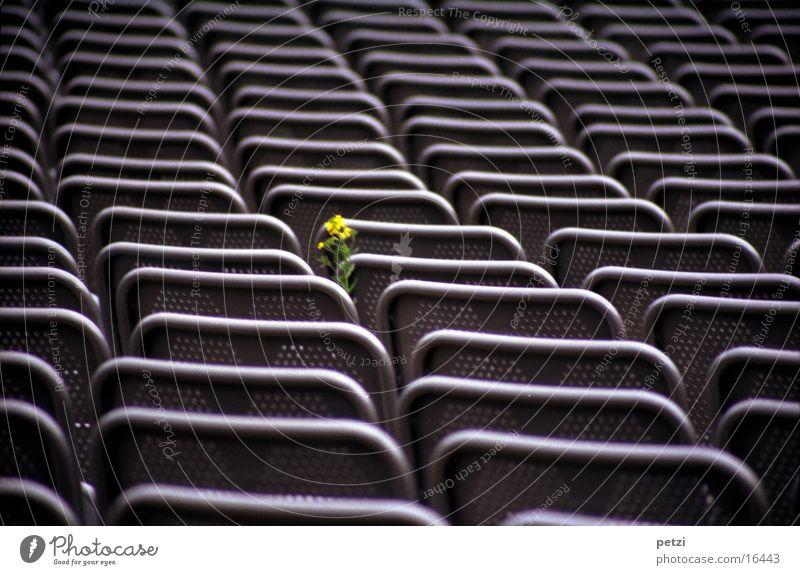 Mutiges Blümlein Blume grün gelb Leben Freizeit & Hobby Stahl Reihe Sessel Steinbruch