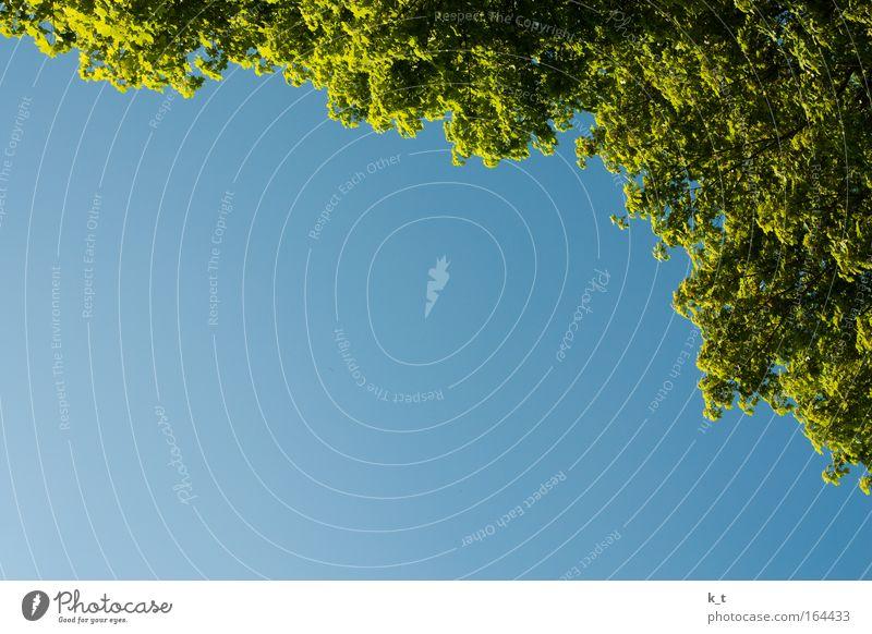 Durchwachsener Tag Natur Baum grün blau Sommer ruhig Leben träumen Wärme Zufriedenheit Umwelt Frieden Sauberkeit rein natürlich Gelassenheit