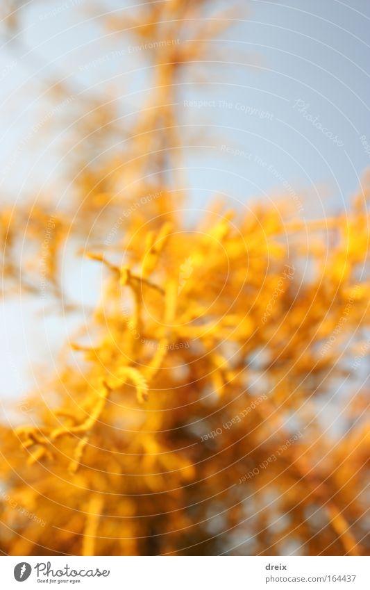 Gelbes Kraut Farbfoto mehrfarbig Außenaufnahme Nahaufnahme abstrakt Menschenleer Hintergrund neutral Tag Licht Starke Tiefenschärfe Zentralperspektive Pflanze